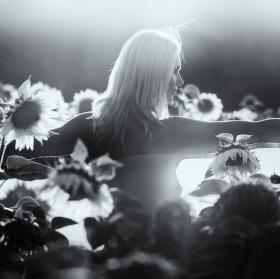 Ve stínu slunečnic
