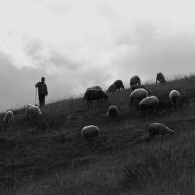 Pastýř
