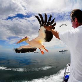 dotknout se pelikána ... samozřejmě, že ne ministra spravedlnosti :-)