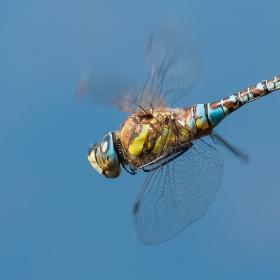 Letecký den na rybníku