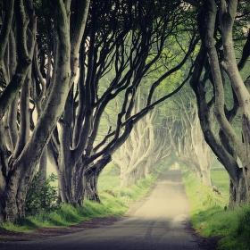 V zemi hobitů a elfů