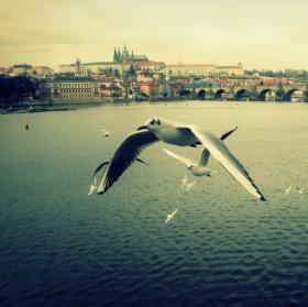 Duše je racek, létá u Vltavy...