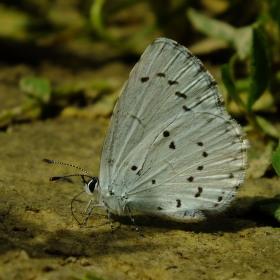 Motýl na zemi