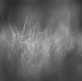 Jen tak v trávě