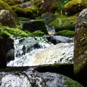 Hamerský potok - Šumava