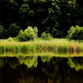 Sušanský rybník