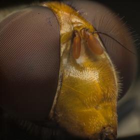 Hmyzoportrét
