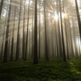 V šumavském lese