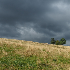 Bude bouřka stromečku?
