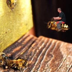 Včelařův koníček