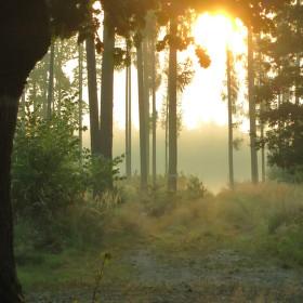 Dnes za úsvitu v ranní mlze...