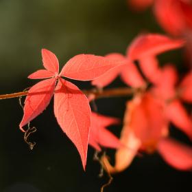 Podzim začal barvit