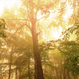 Mlha v lese, aneb, Zoner a dlouhá chvíle...