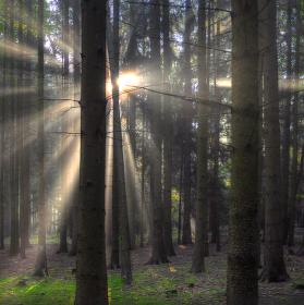 ...ráno v lese II