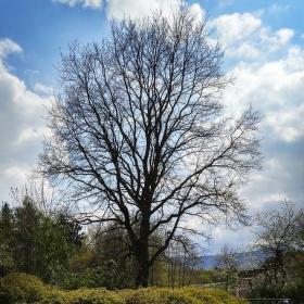 Stromešek