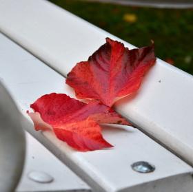 Na lavičce