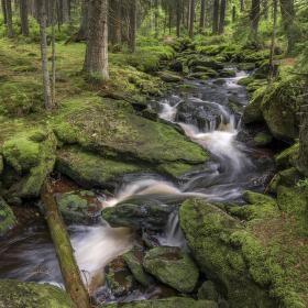 Lesní šum vodní