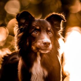 Portrét psa