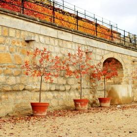 Podzimní zahrady