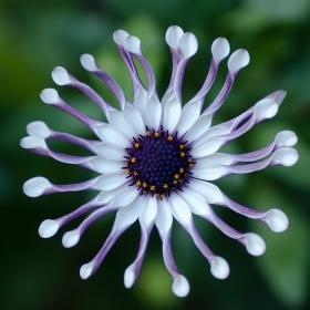 Něžná květina