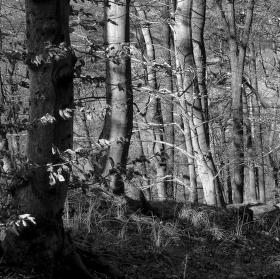 Potulky lesem