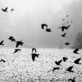 Hitchcockovo pole