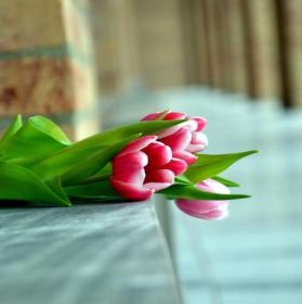 Zapomenuté tulipány