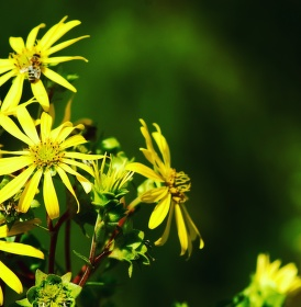 Květina ve světle
