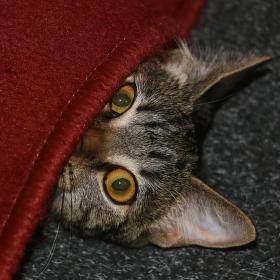 Nikdo mě nevidí, ale já vidím všechno....