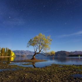 Wanaka tree za svitu měsíce