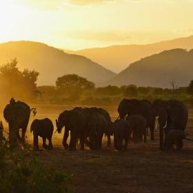 Sloní sraz