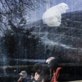 Na zmrzlině u medvěda (odraz ve skle)