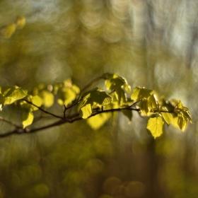 Jarní zelené lístky :-)