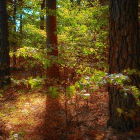 V lesní tišině