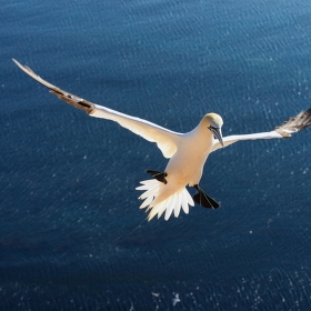 Létající dirigent :-)