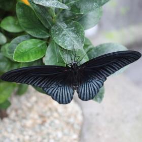 Odpočinek motýla