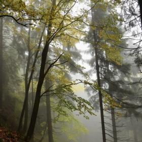Mlha...