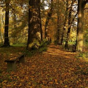 ...podzimní álej...