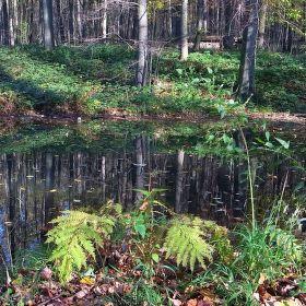 lesní zátiší