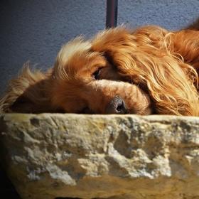 Odpolední siesta....
