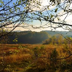 Podzimní příroda ve větvích