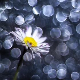zimní květ...