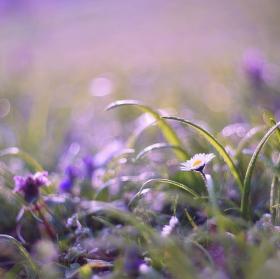 Jarní pastelky