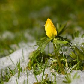 Už bude jaro?