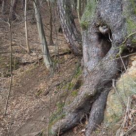 Kořeny jednoho stromu třikrát jinak I.