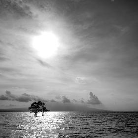 Strom v moři