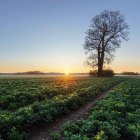 Jarní rána