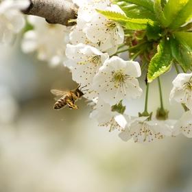 Jaro a pilné včelky