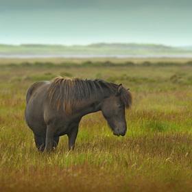 obrázky z islandské přírody (51)
