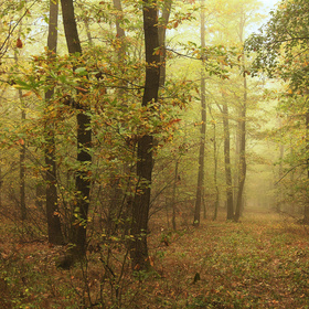 Podzimní náladovka